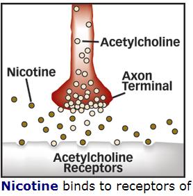 nicotine tobacco acetylcholine